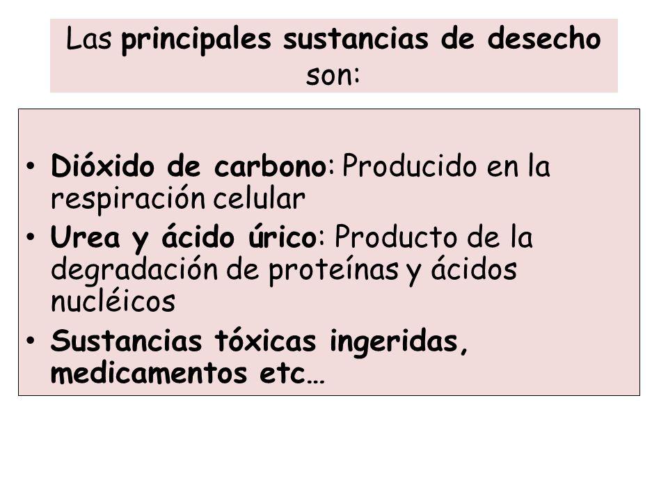 Las principales sustancias de desecho son: