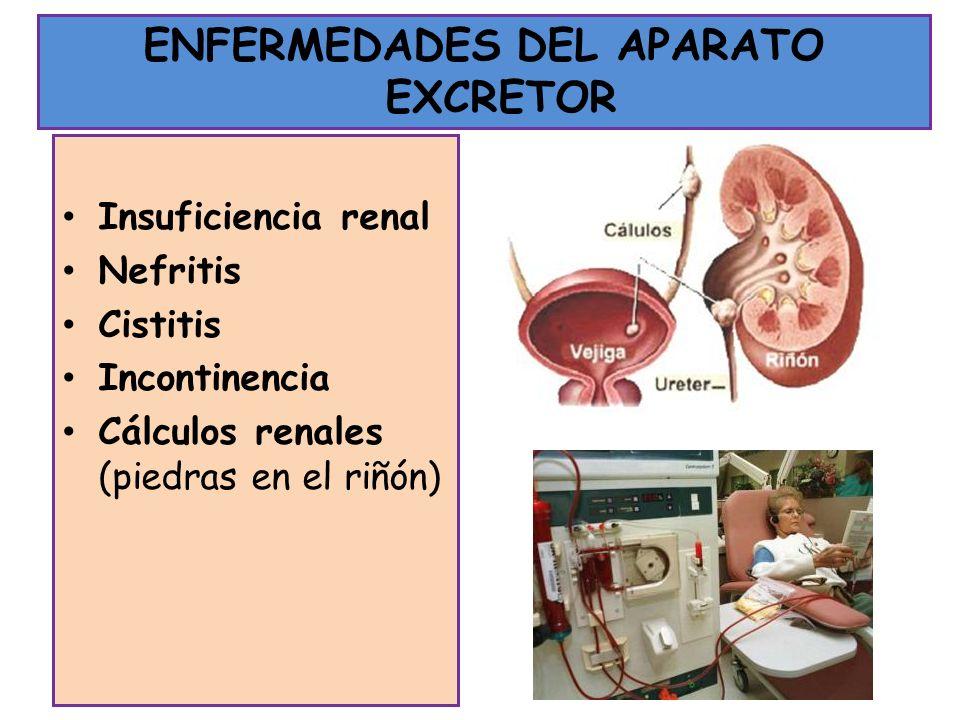 ENFERMEDADES DEL APARATO EXCRETOR