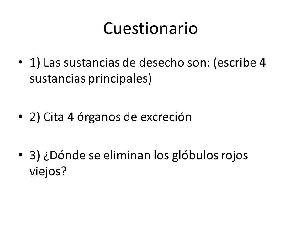 Cuestionario 1) Las sustancias de desecho son: (escribe 4 sustancias principales) 2) Cita 4 órganos de excreción.