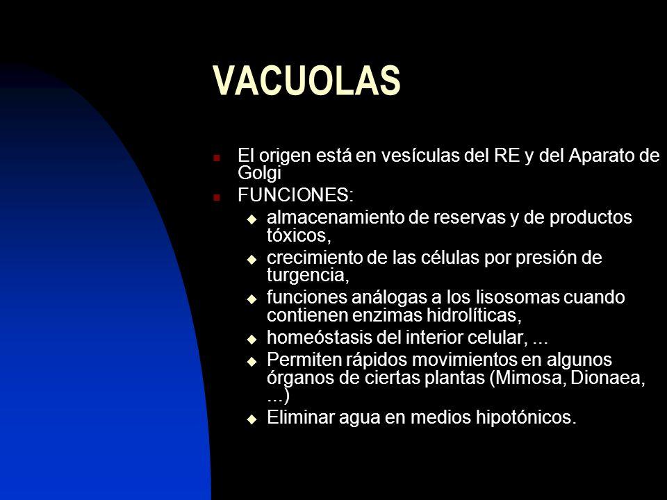 VACUOLAS El origen está en vesículas del RE y del Aparato de Golgi