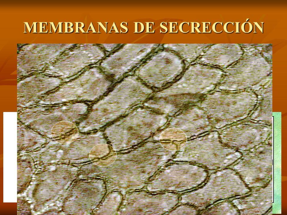 MEMBRANAS DE SECRECCIÓN