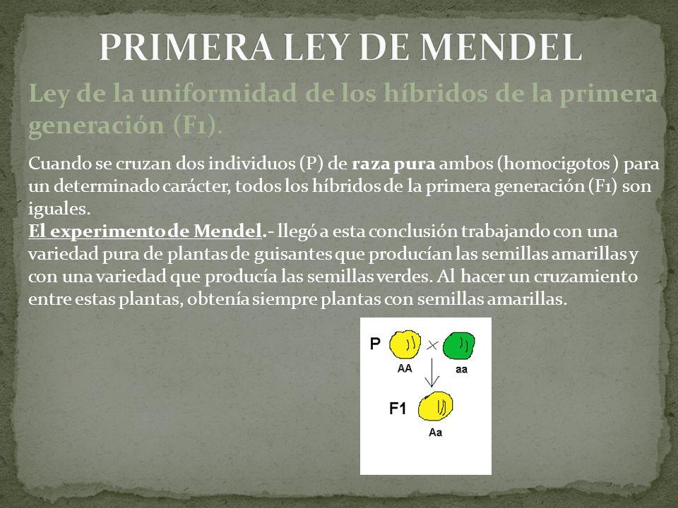 PRIMERA LEY DE MENDEL Ley de la uniformidad de los híbridos de la primera generación (F1).