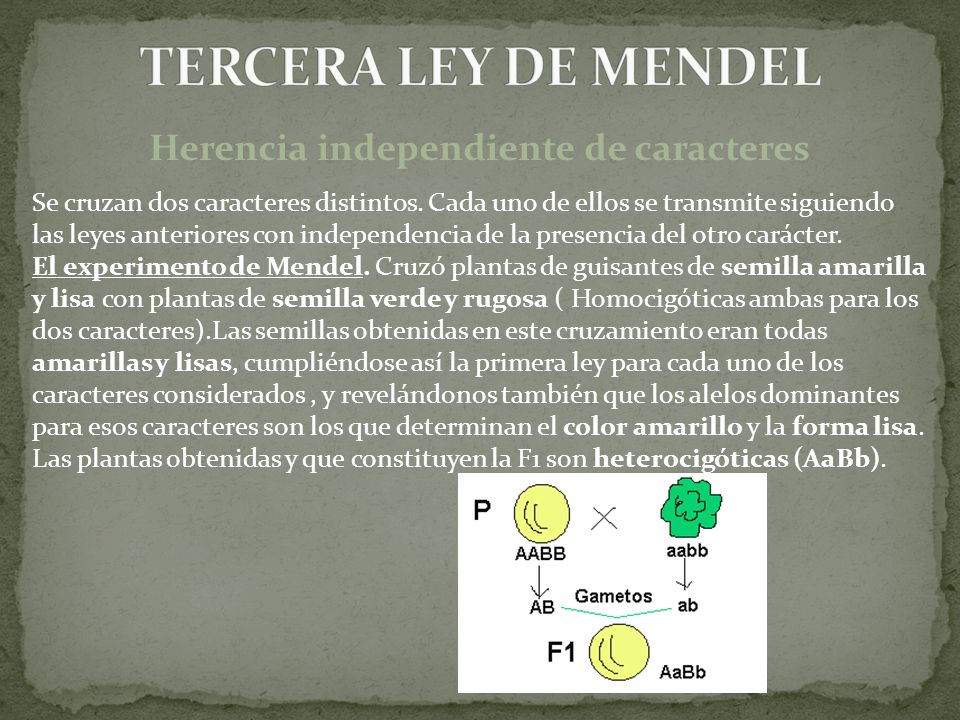 Herencia independiente de caracteres