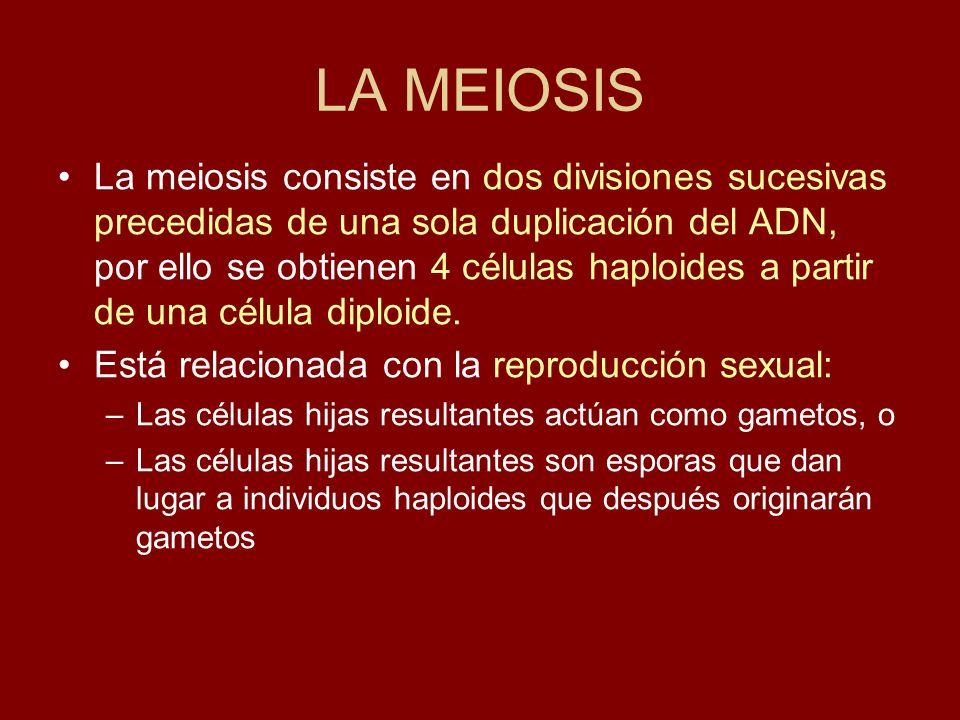 LA MEIOSIS