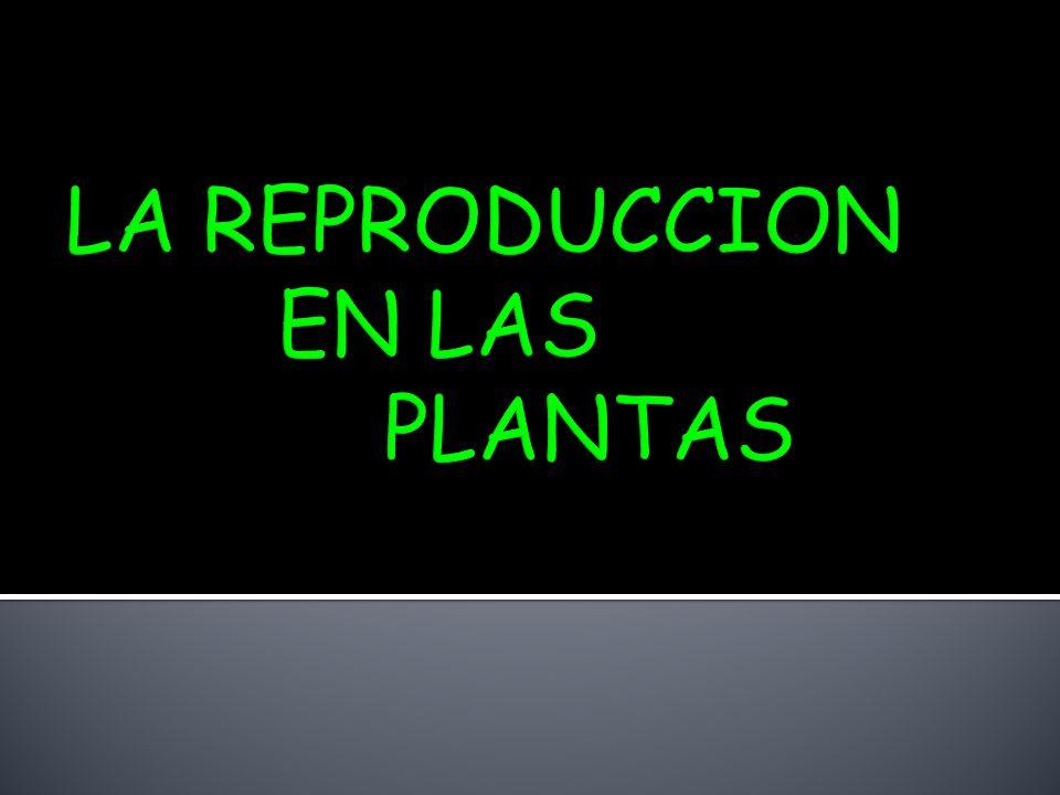 LA REPRODUCCION EN LAS PLANTAS