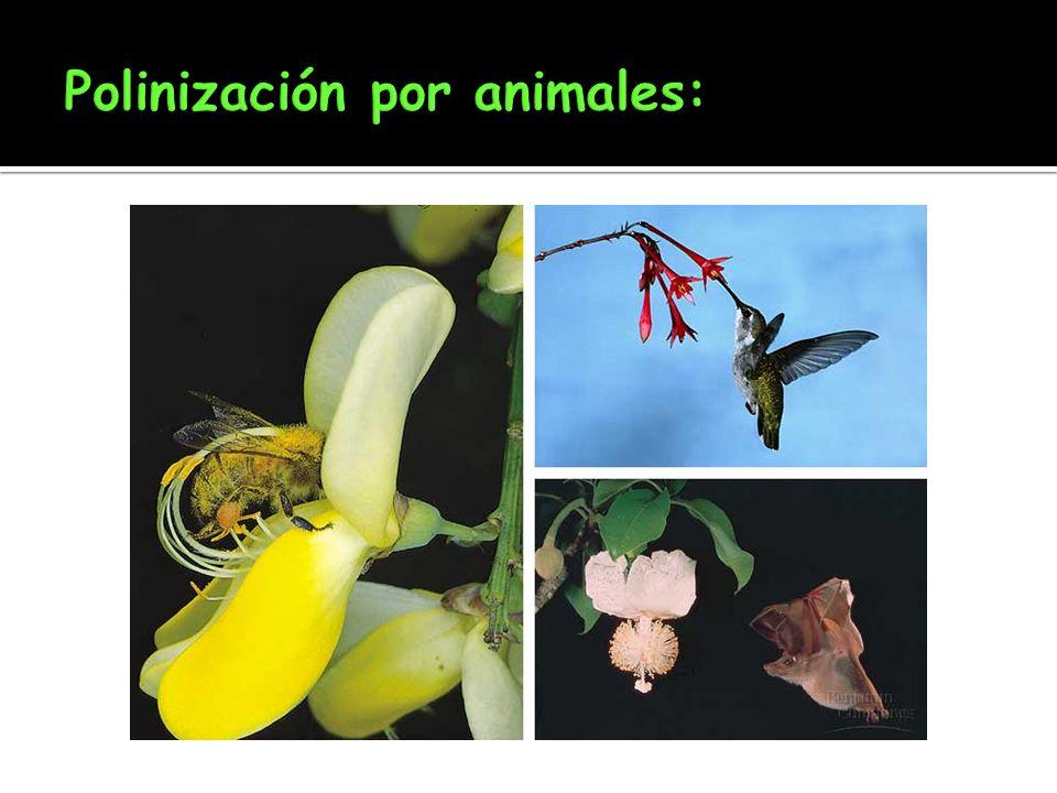 Polinización por animales: