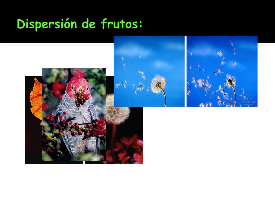 Dispersión de frutos: