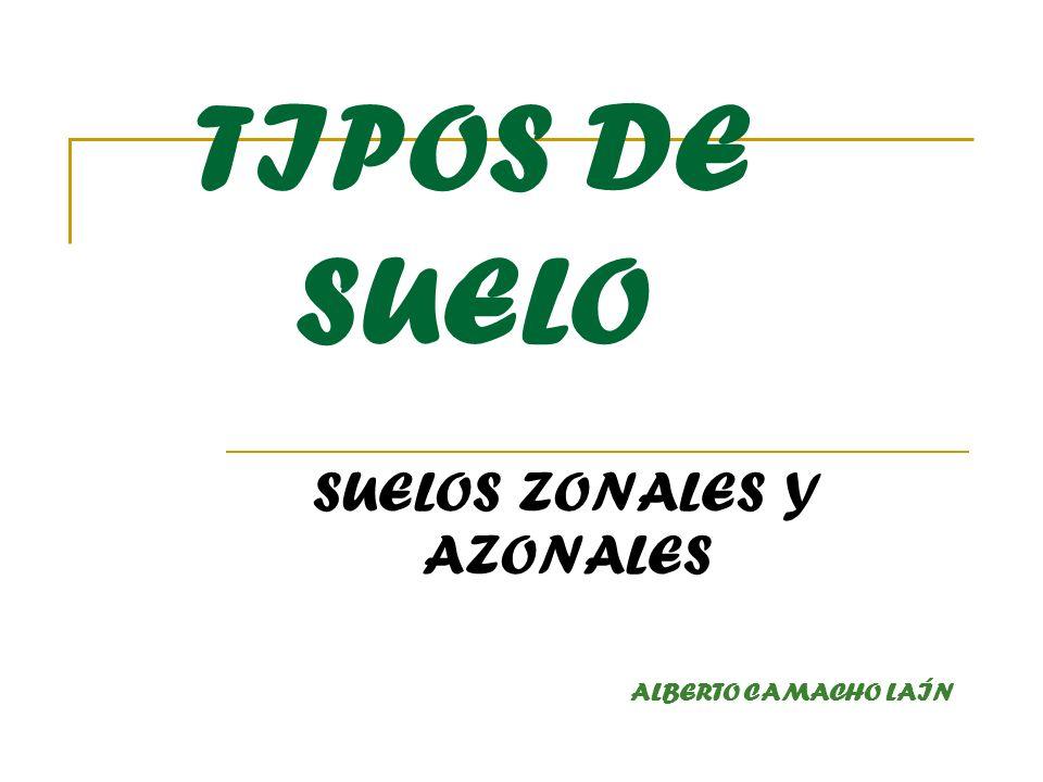 SUELOS ZONALES Y AZONALES