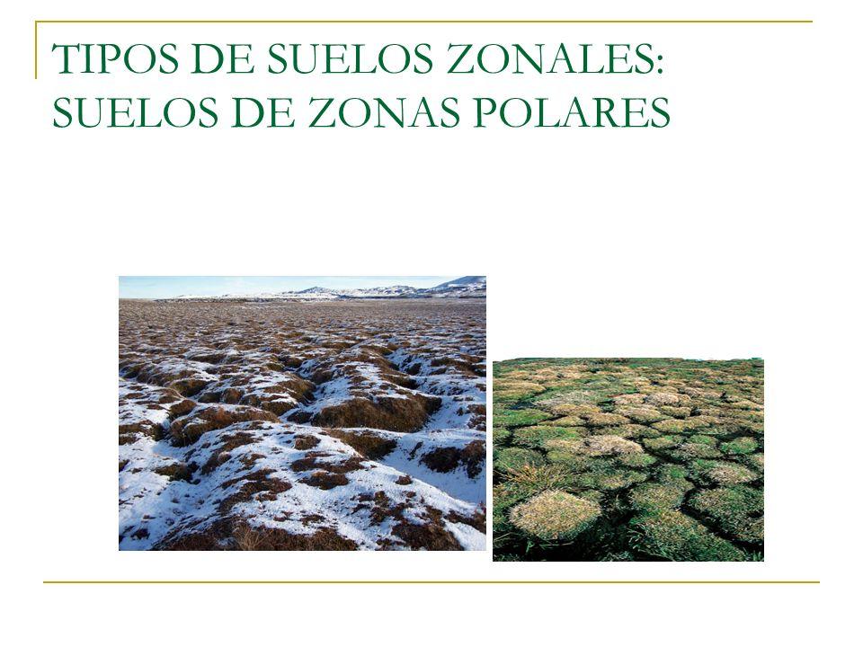 Tipos de suelo gallery of nuevo mapa interactivo mundial - Tipos de suelos ...