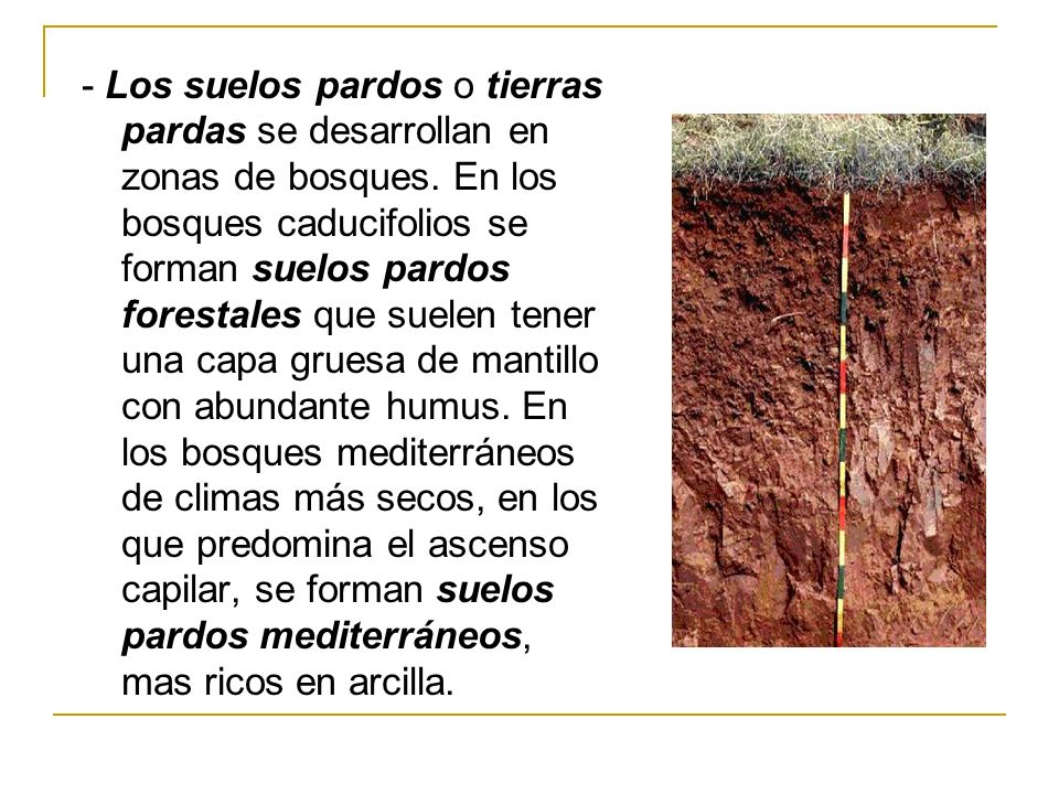- Los suelos pardos o tierras pardas se desarrollan en zonas de bosques.