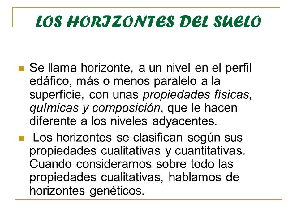 LOS HORIZONTES DEL SUELO