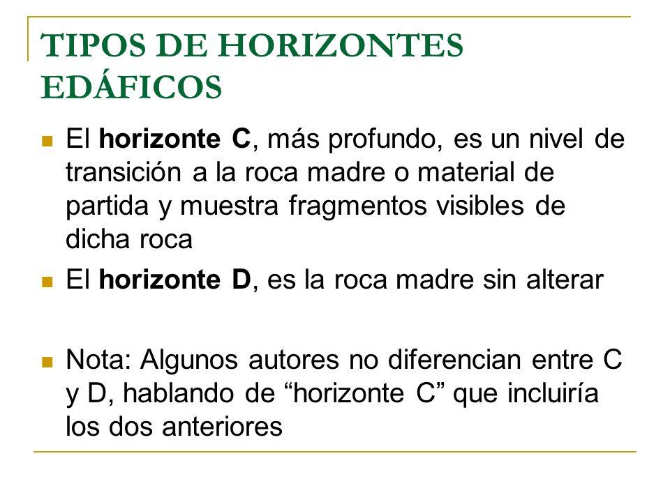TIPOS DE HORIZONTES EDÁFICOS