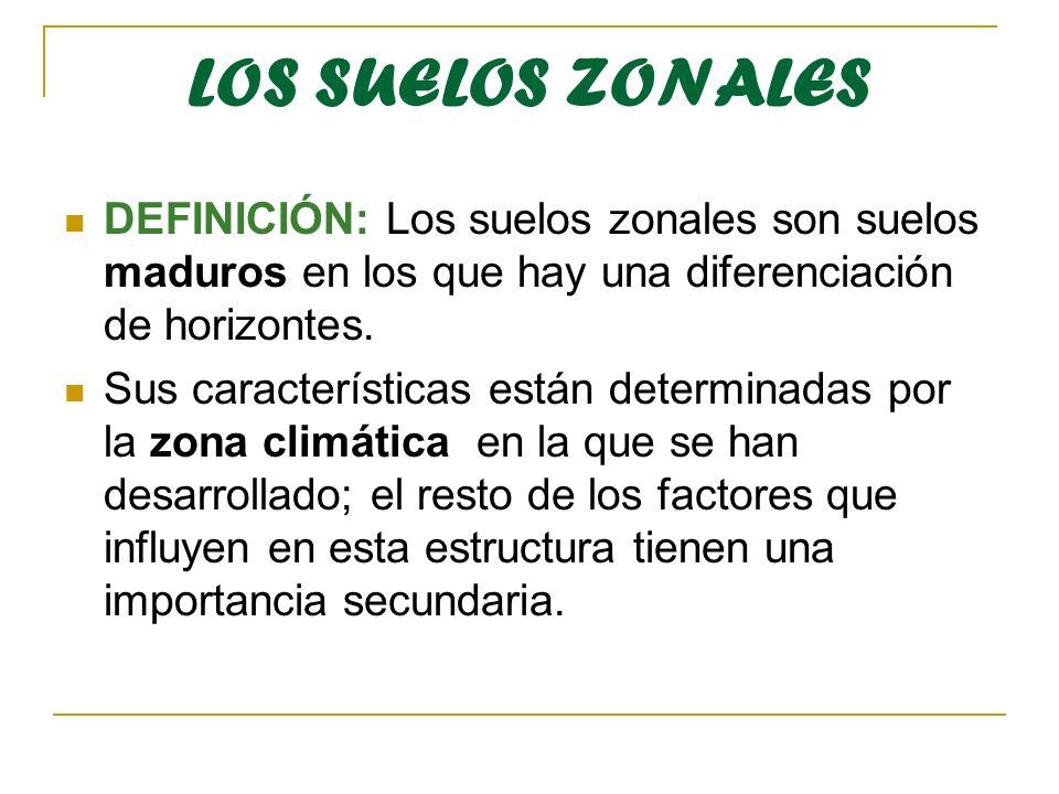 LOS SUELOS ZONALES DEFINICIÓN: Los suelos zonales son suelos maduros en los que hay una diferenciación de horizontes.