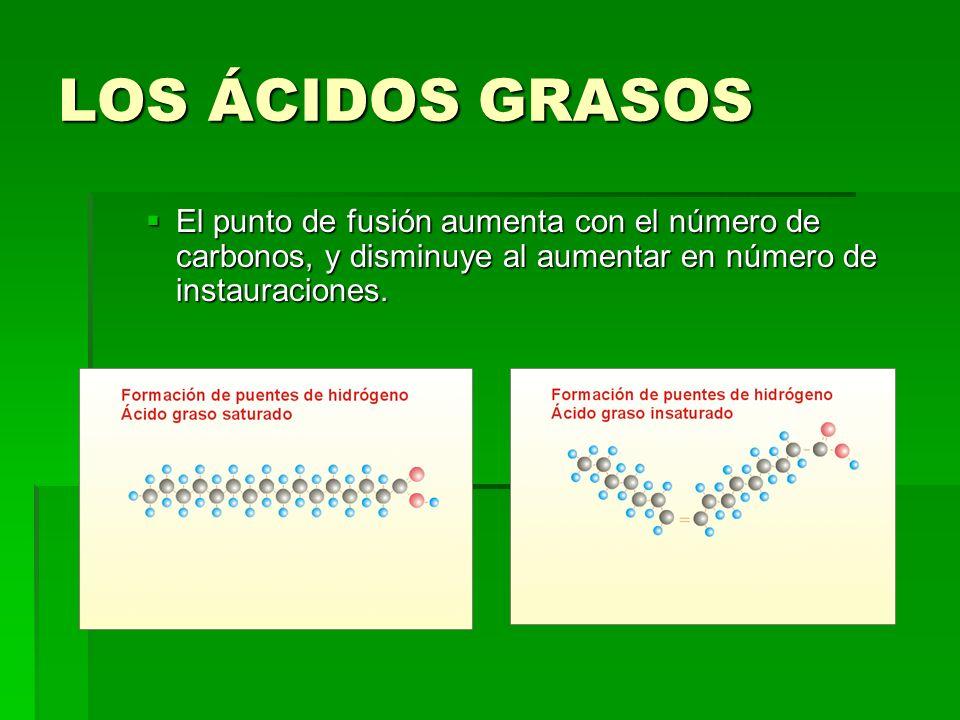 LOS ÁCIDOS GRASOS El punto de fusión aumenta con el número de carbonos, y disminuye al aumentar en número de instauraciones.