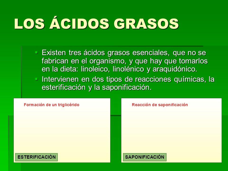 LOS ÁCIDOS GRASOS