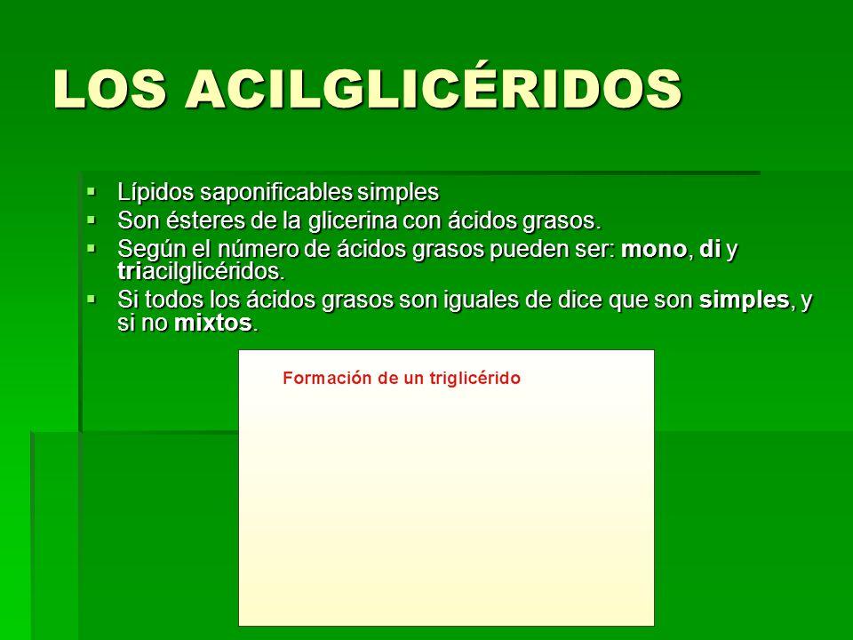 LOS ACILGLICÉRIDOS Lípidos saponificables simples
