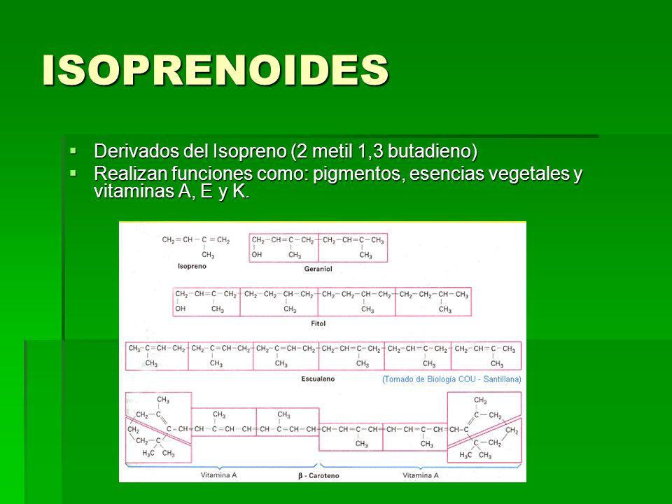 ISOPRENOIDES Derivados del Isopreno (2 metil 1,3 butadieno)