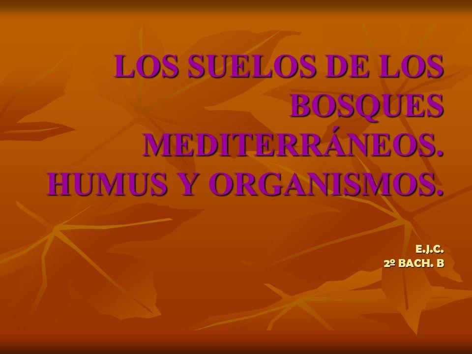 LOS SUELOS DE LOS BOSQUES MEDITERRÁNEOS. HUMUS Y ORGANISMOS. E. J. C