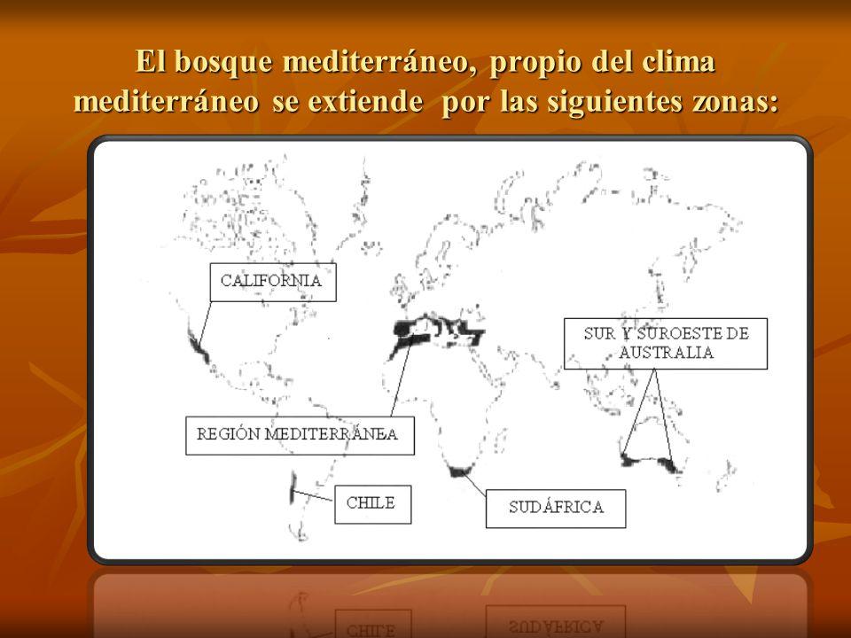 El bosque mediterráneo, propio del clima mediterráneo se extiende por las siguientes zonas: