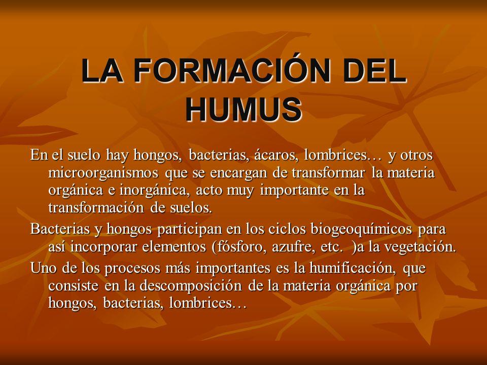 LA FORMACIÓN DEL HUMUS