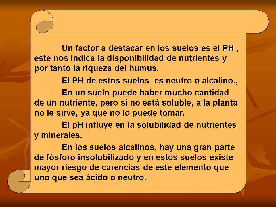 El PH de estos suelos es neutro o alcalino.,