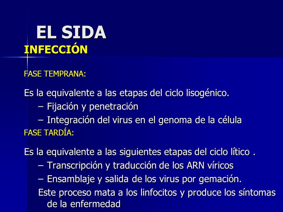 EL SIDA INFECCIÓN Es la equivalente a las etapas del ciclo lisogénico.