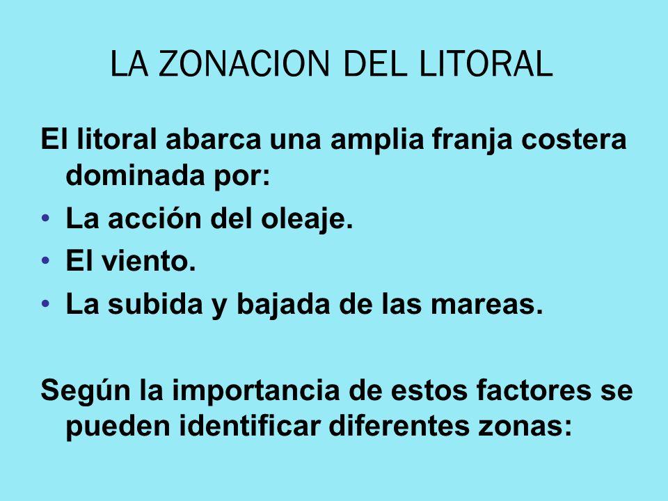 LA ZONACION DEL LITORAL