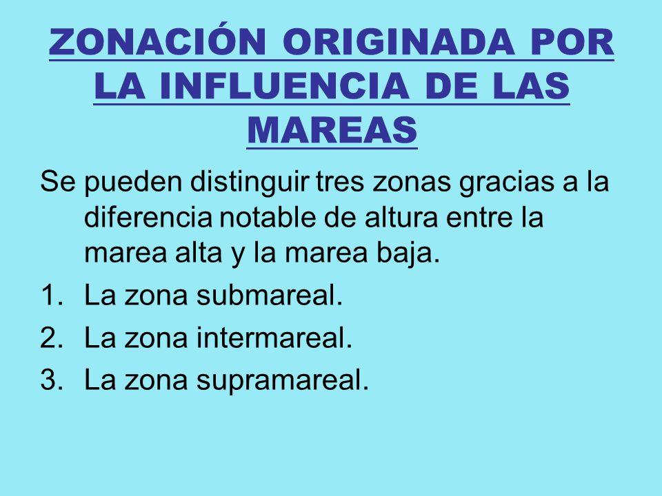 ZONACIÓN ORIGINADA POR LA INFLUENCIA DE LAS MAREAS