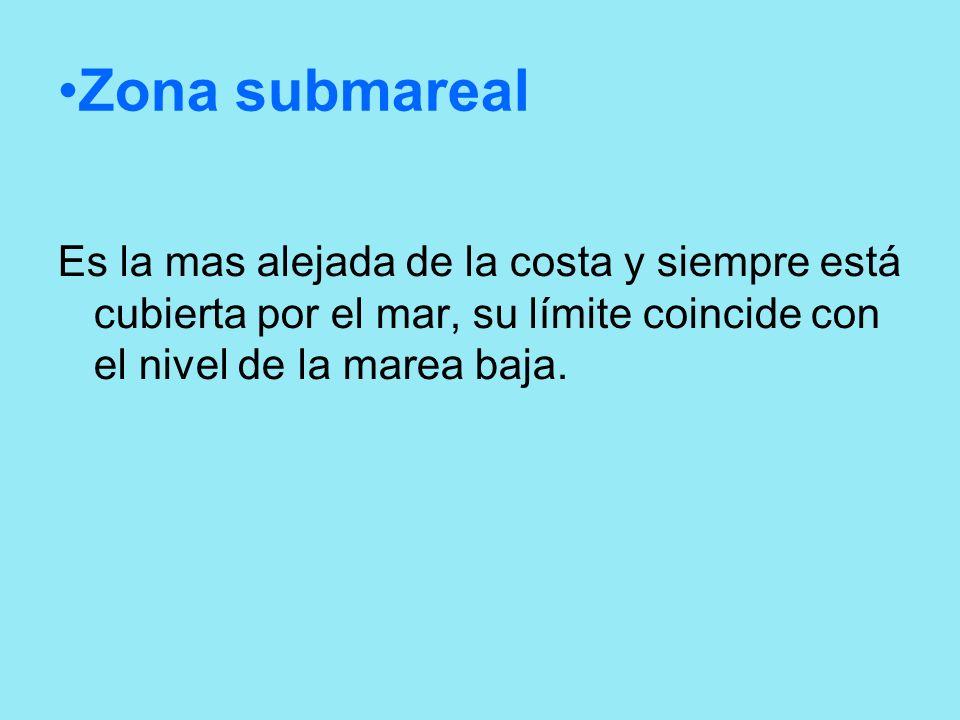 Zona submareal Es la mas alejada de la costa y siempre está cubierta por el mar, su límite coincide con el nivel de la marea baja.