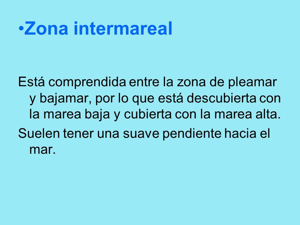 Zona intermarealEstá comprendida entre la zona de pleamar y bajamar, por lo que está descubierta con la marea baja y cubierta con la marea alta.