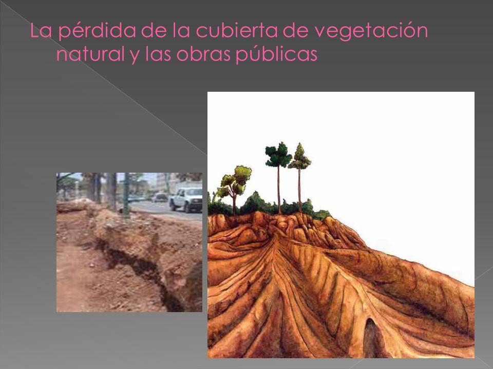 La pérdida de la cubierta de vegetación natural y las obras públicas