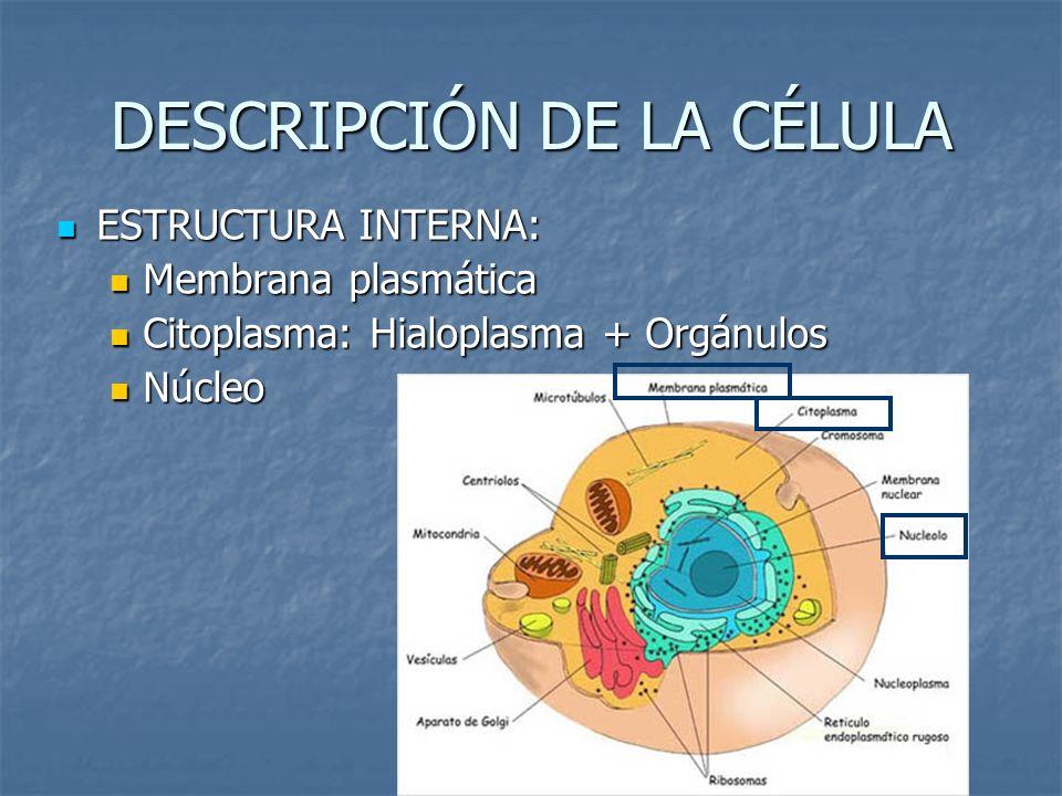 DESCRIPCIÓN DE LA CÉLULA