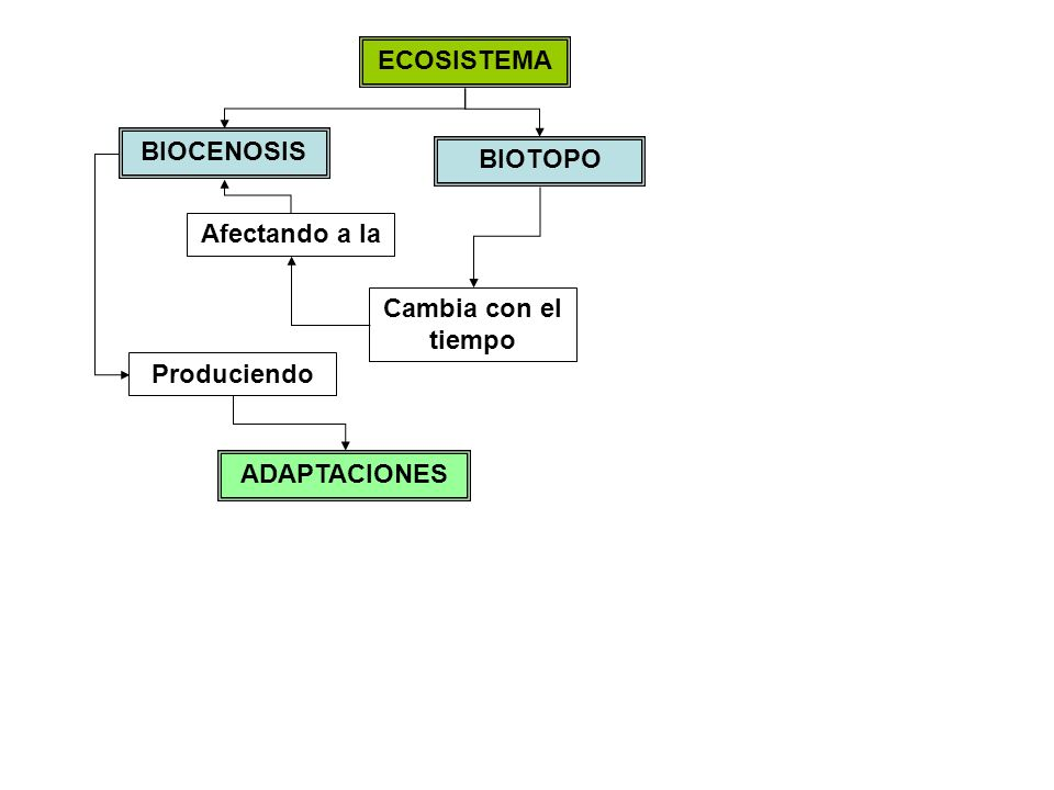 ECOSISTEMA BIOCENOSIS BIOTOPO Afectando a la Cambia con el tiempo Produciendo ADAPTACIONES