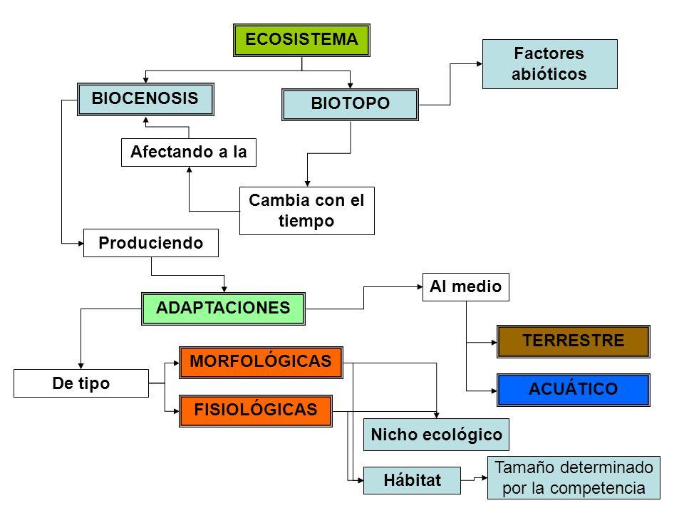 ECOSISTEMA Factores abióticos. BIOCENOSIS. BIOTOPO. Afectando a la. Cambia con el tiempo. Produciendo.
