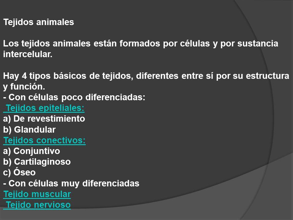 Tejidos animales Los tejidos animales están formados por células y por sustancia intercelular. Hay 4 tipos básicos de tejidos, diferentes entre sí por su estructura y función.