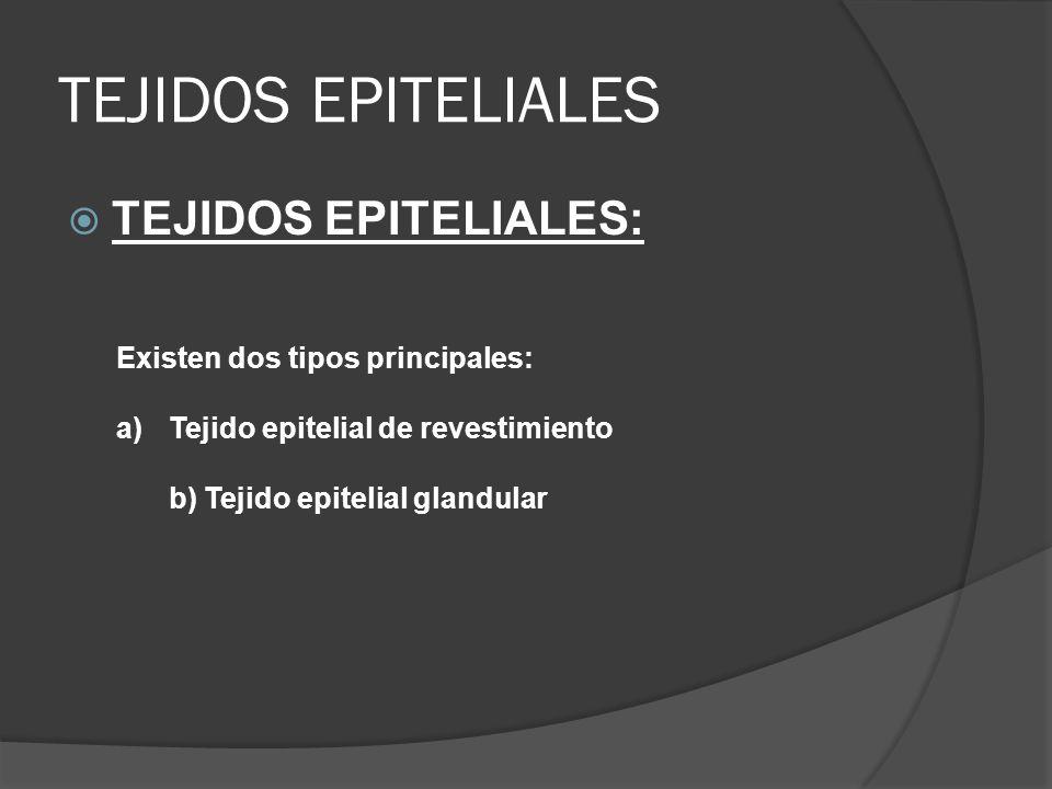 TEJIDOS EPITELIALES Tejidos epiteliales: