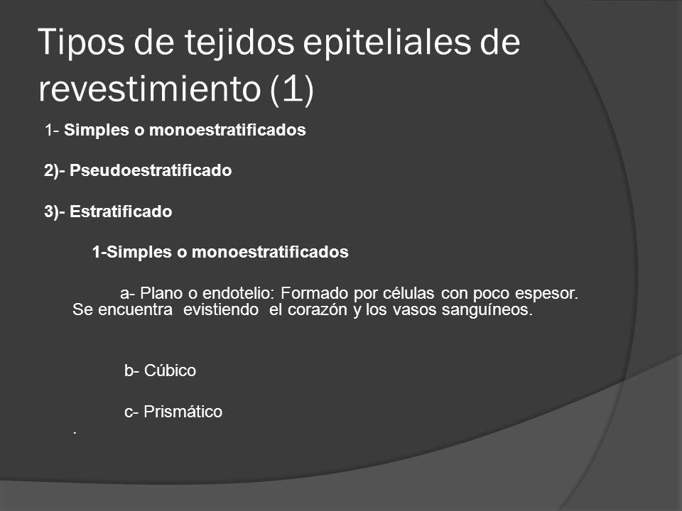 Tipos de tejidos epiteliales de revestimiento (1)