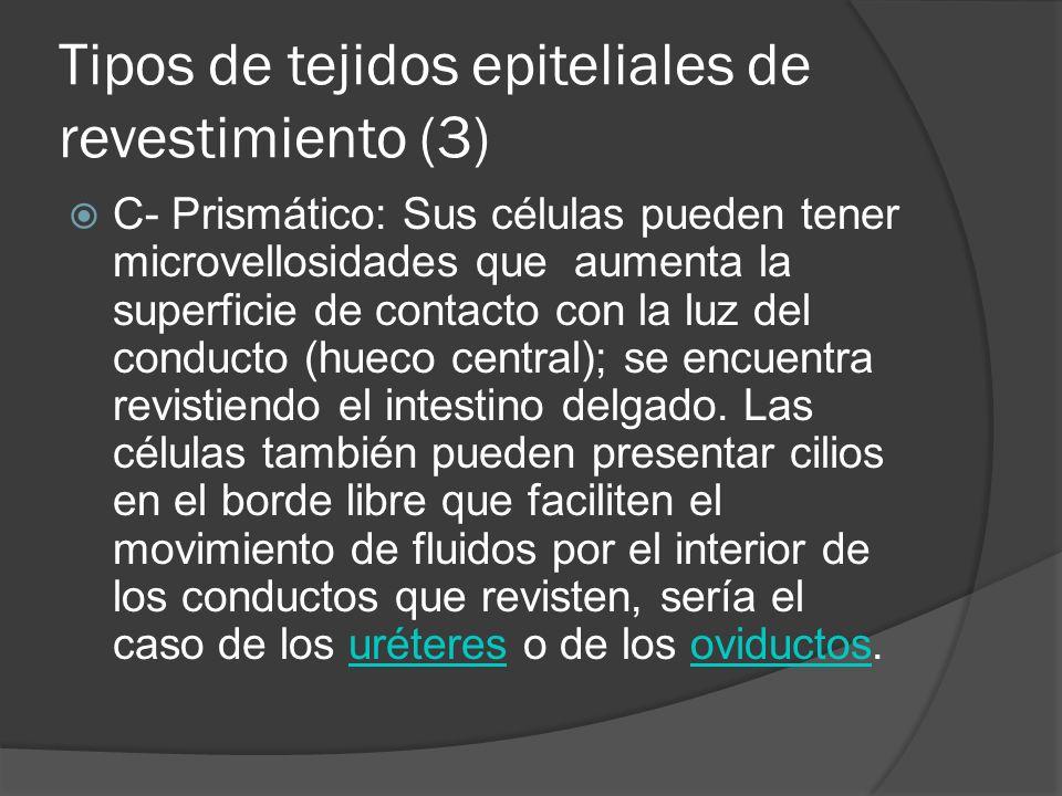 Tipos de tejidos epiteliales de revestimiento (3)