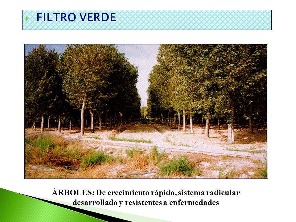 FILTRO VERDE ÁRBOLES: De crecimiento rápido, sistema radicular desarrollado y resistentes a enfermedades.