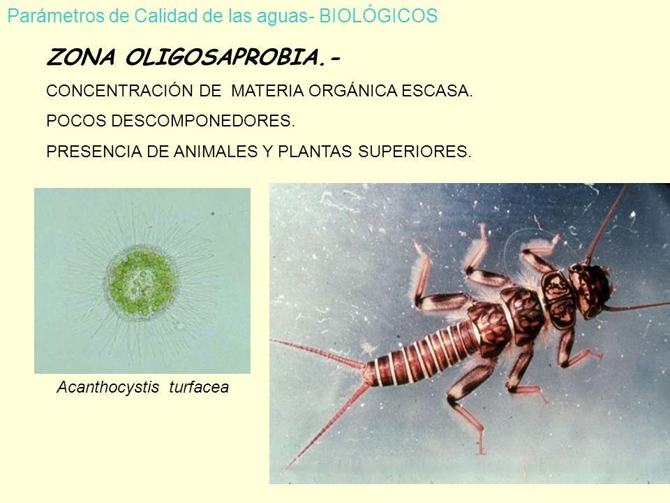 ZONA OLIGOSAPROBIA.- Parámetros de Calidad de las aguas- BIOLÓGICOS