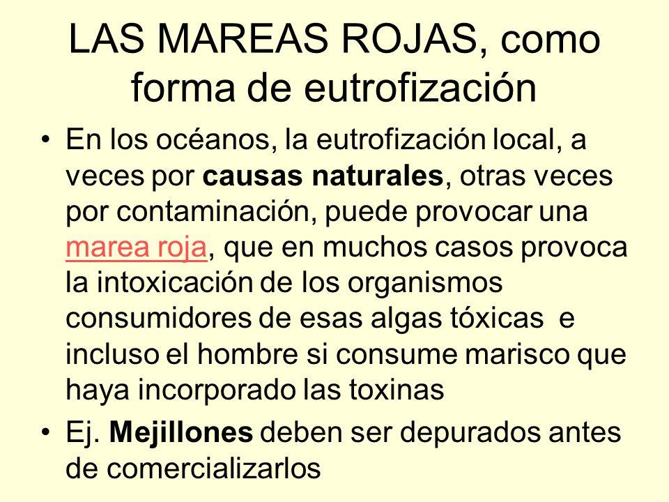 LAS MAREAS ROJAS, como forma de eutrofización