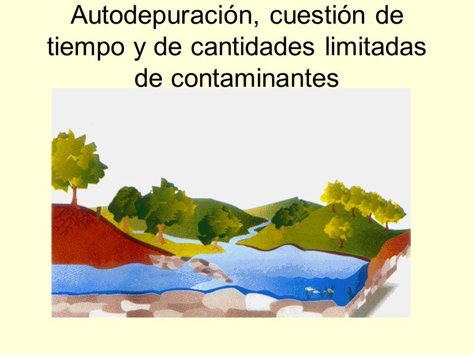 Autodepuración, cuestión de tiempo y de cantidades limitadas de contaminantes