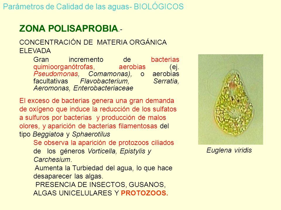 ZONA POLISAPROBIA.- Parámetros de Calidad de las aguas- BIOLÓGICOS