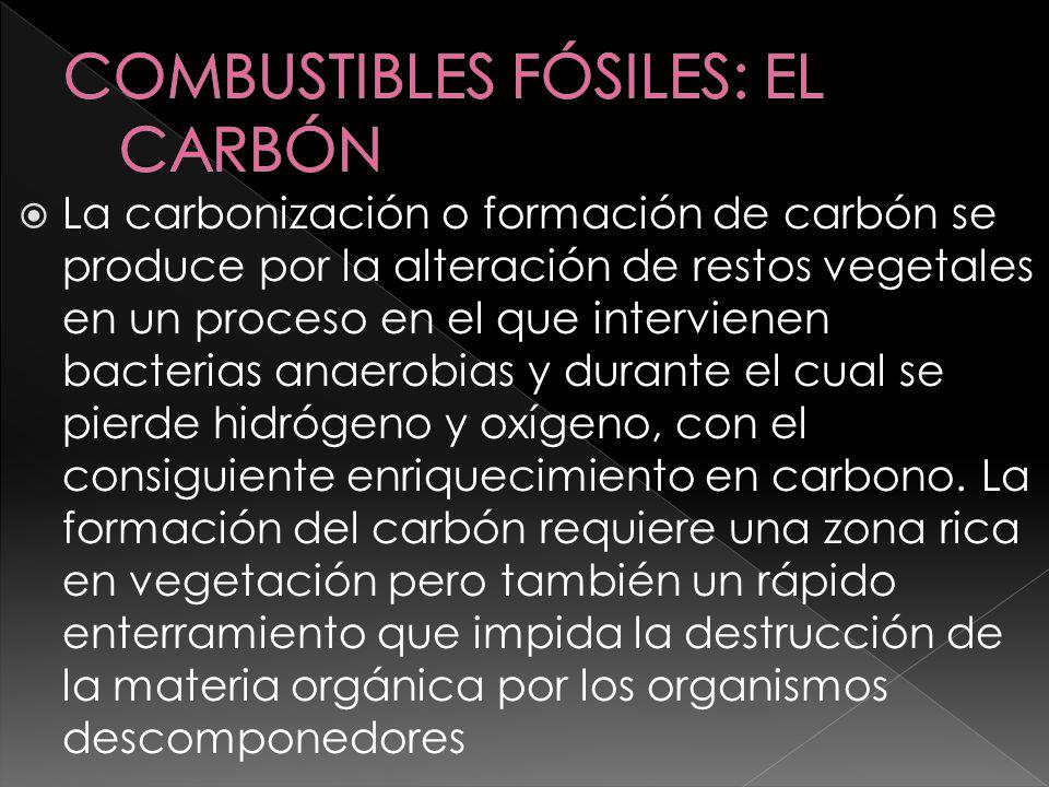 COMBUSTIBLES FÓSILES: EL CARBÓN