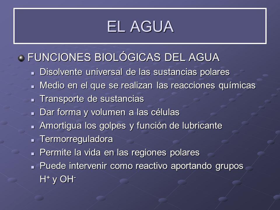 EL AGUA FUNCIONES BIOLÓGICAS DEL AGUA