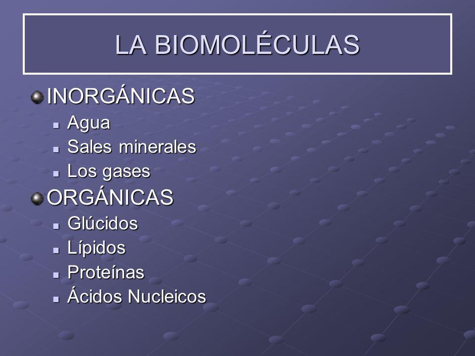 LA BIOMOLÉCULAS INORGÁNICAS ORGÁNICAS Agua Sales minerales Los gases