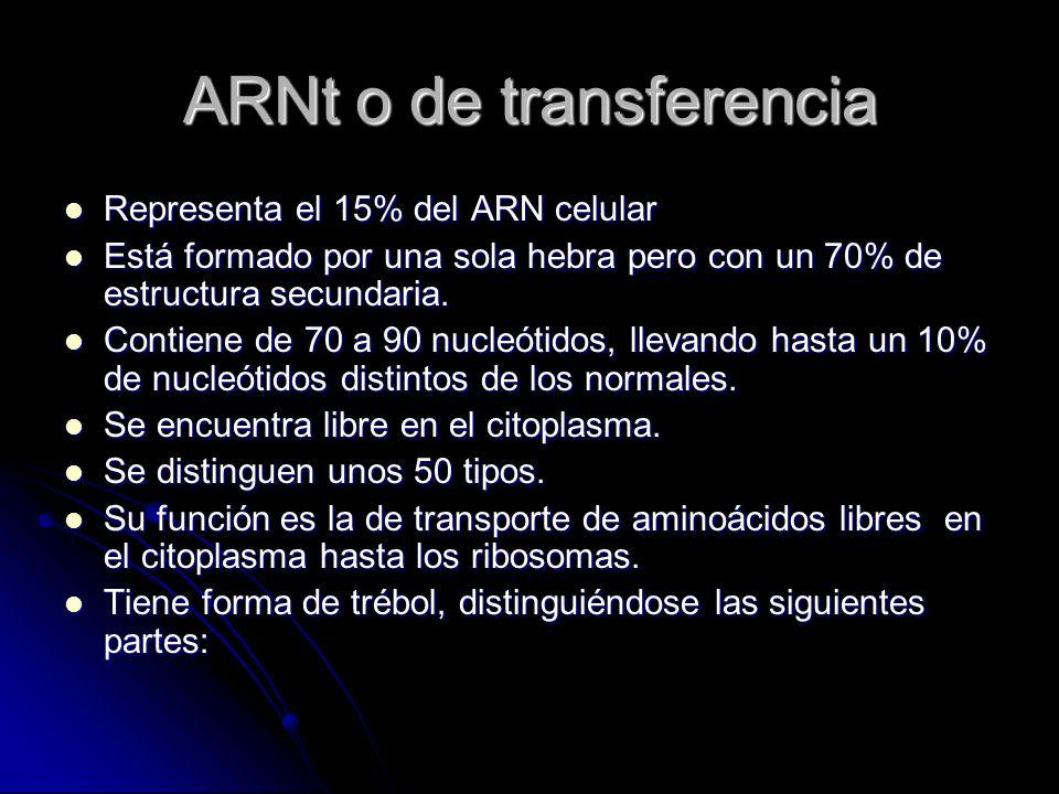 ARNt o de transferencia