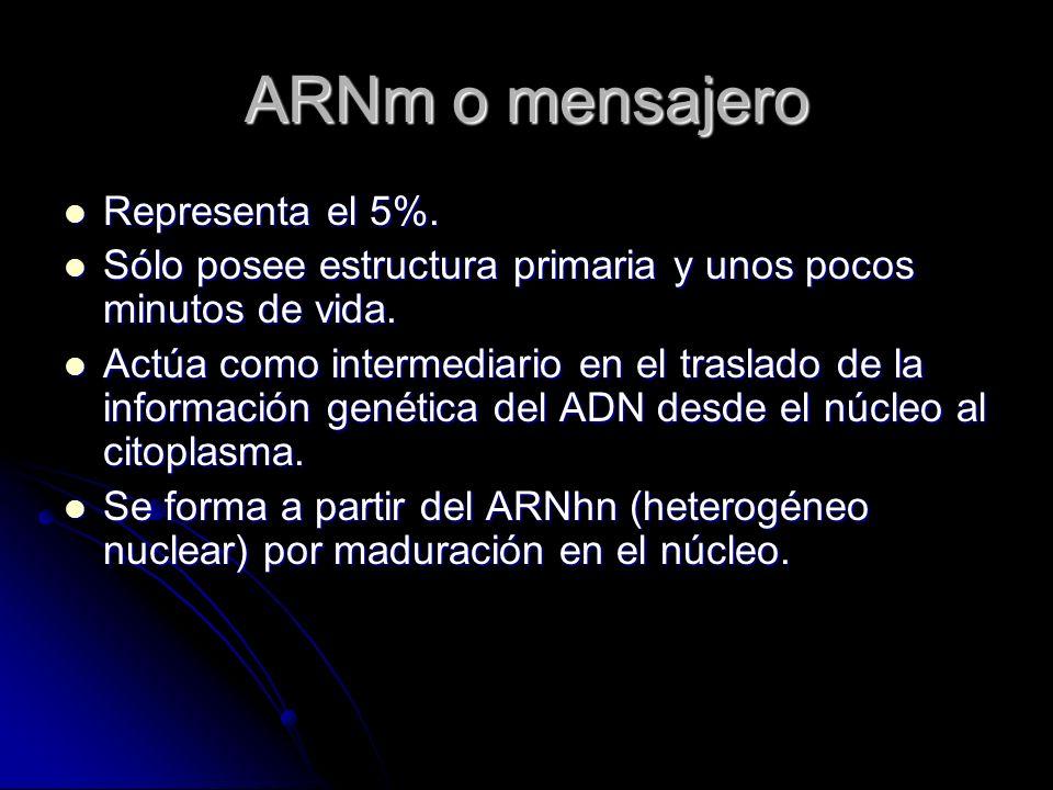 ARNm o mensajero Representa el 5%.