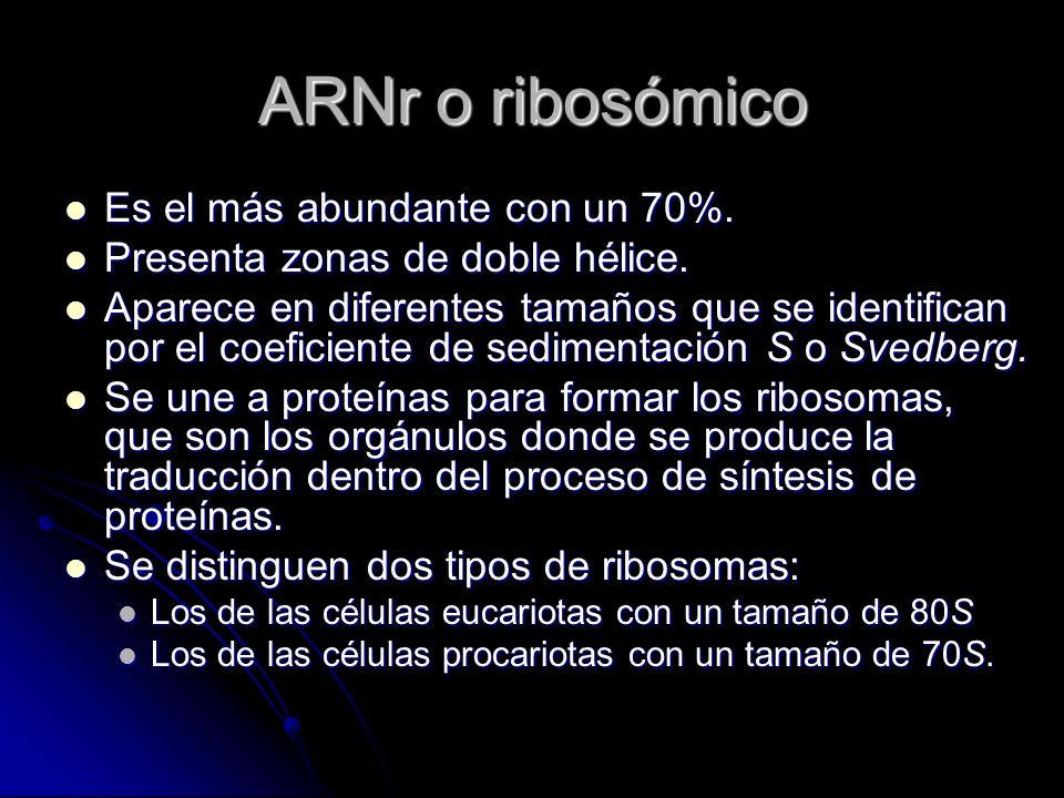 ARNr o ribosómico Es el más abundante con un 70%.