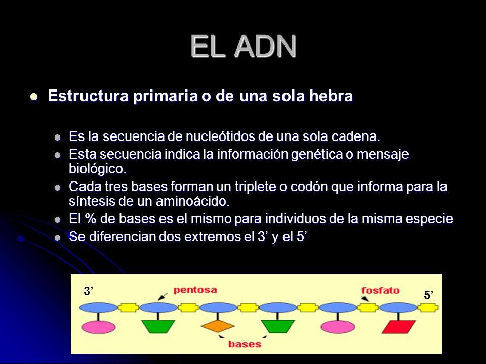 EL ADN Estructura primaria o de una sola hebra